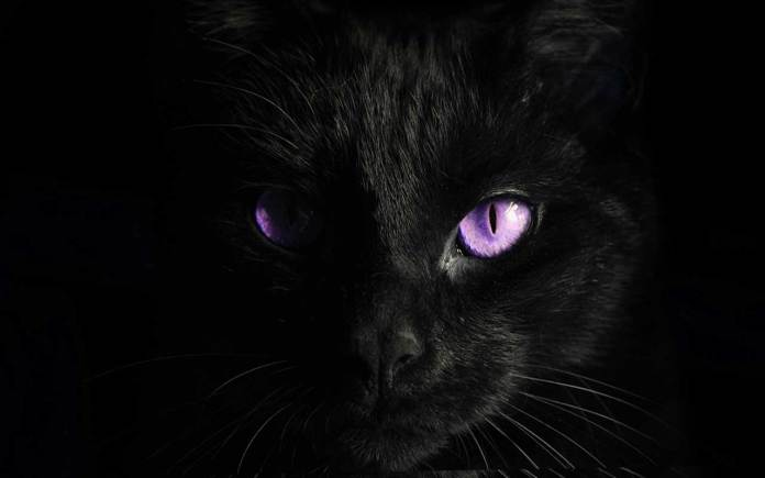 purple-eyes-black-cat-surrealism-photography-inspirational-quote
