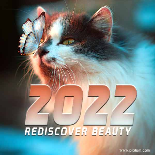 Rediscover-beauty-Look-for-more-beautiful-things-close-to-you-in-the-year-2022.