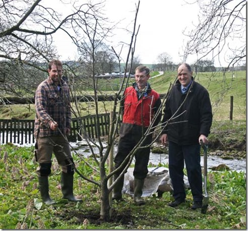 treeplanting_four