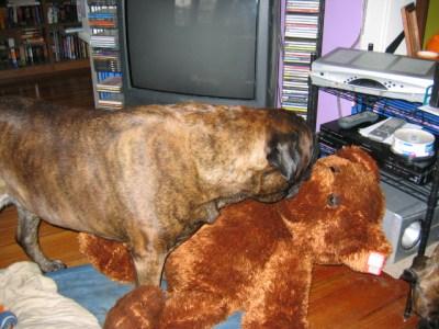 Targ and the new teddy
