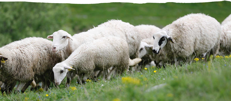 Edredones de lana hechos con materiales naturales