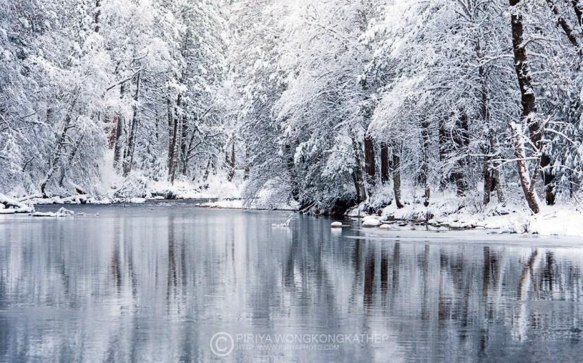 white-christmas_23890742622_o
