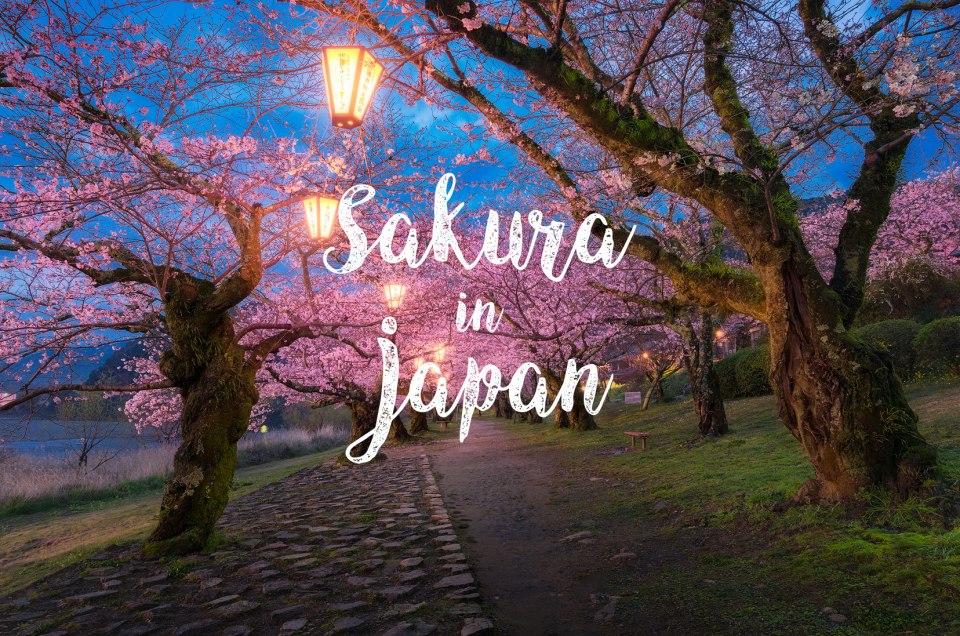Location Review: 2016 Cherry Blossom แนะนำจุดถ่ายภาพซากุระ