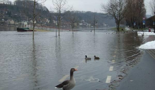 Wie die Stadtverwaltung Pirna mitteilt, kann der Elbeparkplatz in Copitz aufgrund des steigenden Hochwassers ab […]