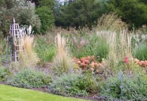 jesienne trawy w ogrodzie
