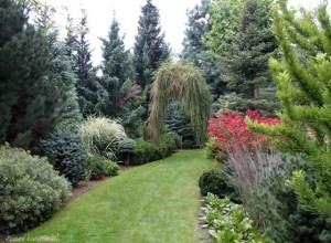 leśny ogród