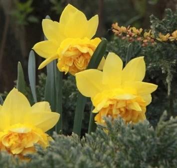 Co robimy w ogrodzie w ostatnim tygodniu kwietnia