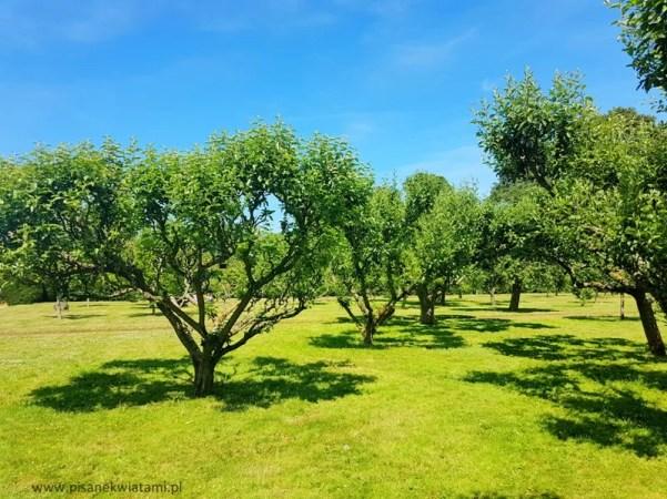 Angielski sposób przycinania drzew owocowych
