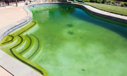 Cómo eliminar algas de tu piscina