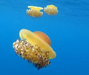 lee-balelles-zona-de-inmersion-piscis-diving