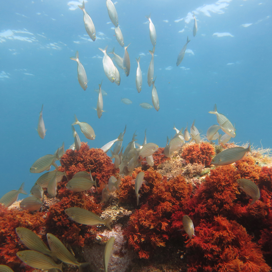 zonas de inmersion piscis diving