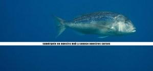 bucear-costa-brava-submarinismo-buceo-cursos-titulacion-padi