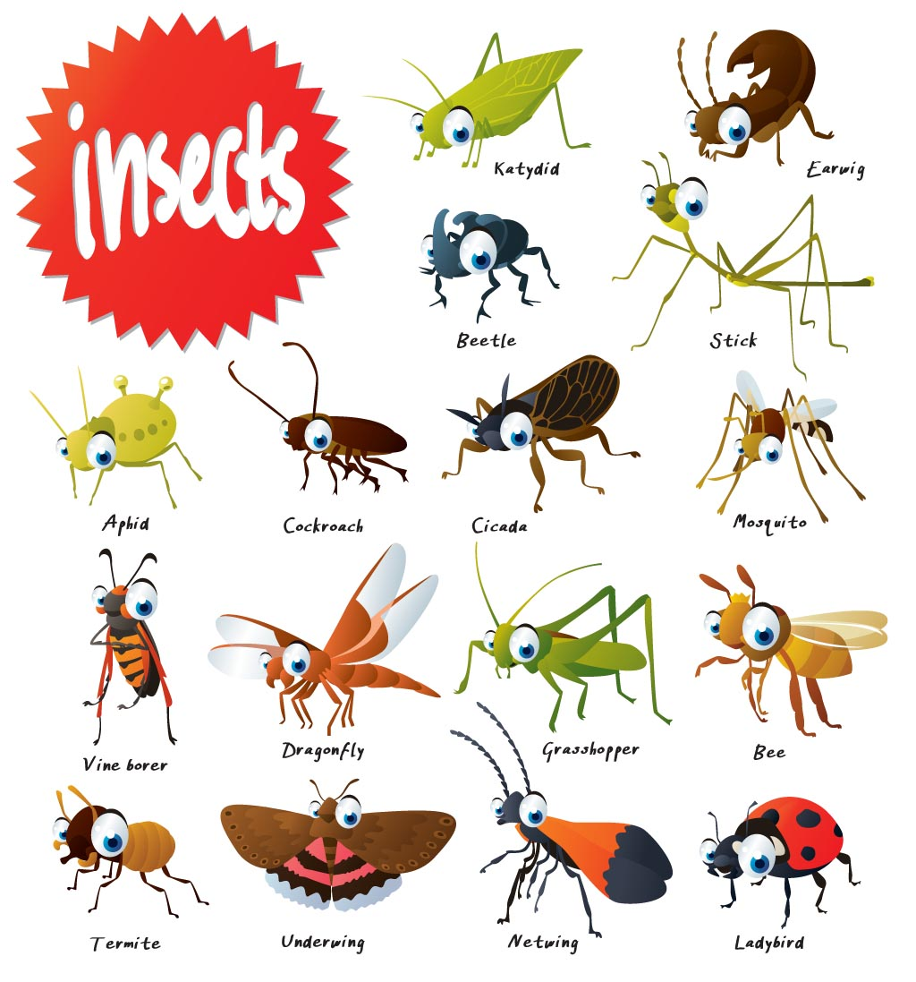 Insects For Kids