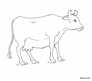 Domestic Animals Coloring Pages | Pitara Kids Network