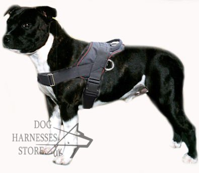 Staffy Harness For Pulling