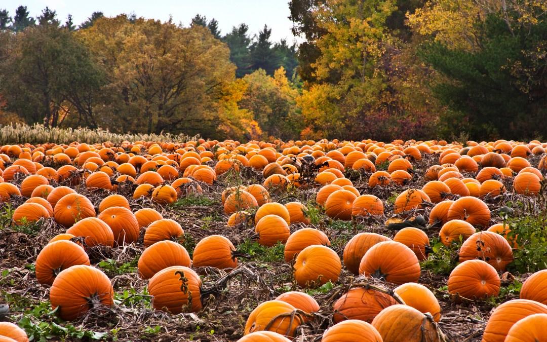 Best Pumpkin Patches Near Pittsburgh