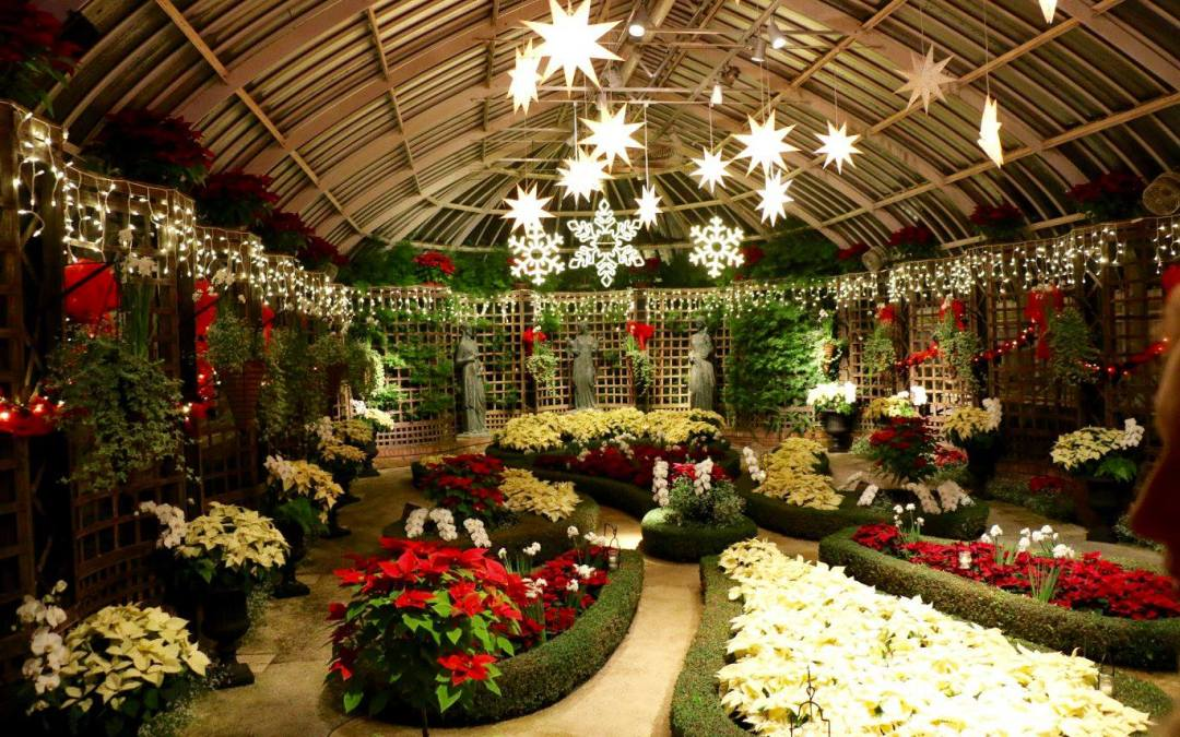 phipps holiday