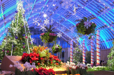 phipps winter show