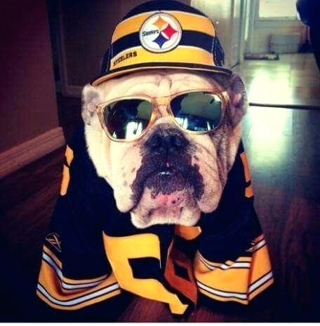5 Dog Friendly Places In Pittsburgh To Watch The Steelers Game