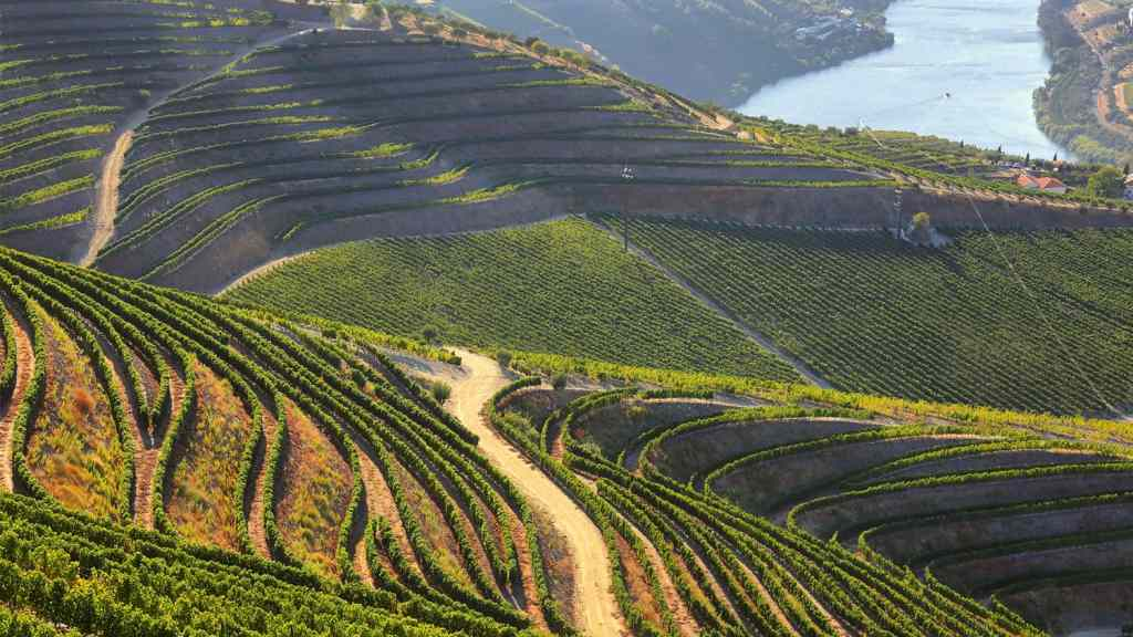 A sweeping view of Douro vineyards and river from Valença do Douro in Portugal.