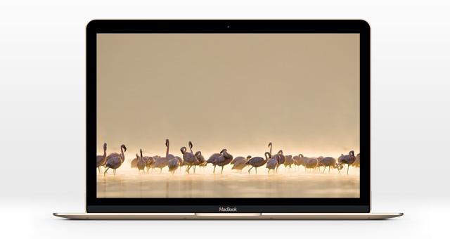 The New Macbook Psd Mockup Psd Mock Up Templates Pixeden
