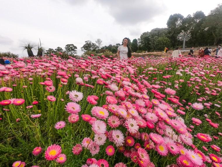 spring paper daisy display australia sydney
