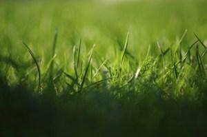 Was muss man beachten, wenn man einen schönen Rasen anlegen will?
