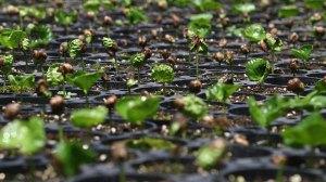 Vertikale Landwirtschaft ist die zukünftige Landwirtschaft