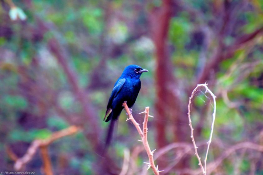 A Visit to Okhla Bird Sanctuary in Delhi