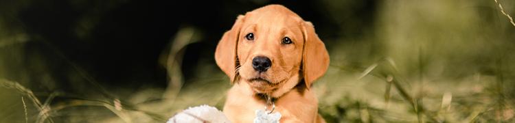 Welpenshooting-Hundeshooting-001