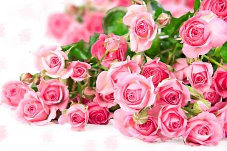 Pink Rose Wallpaper For Mobile Wallpaperworld1st Com