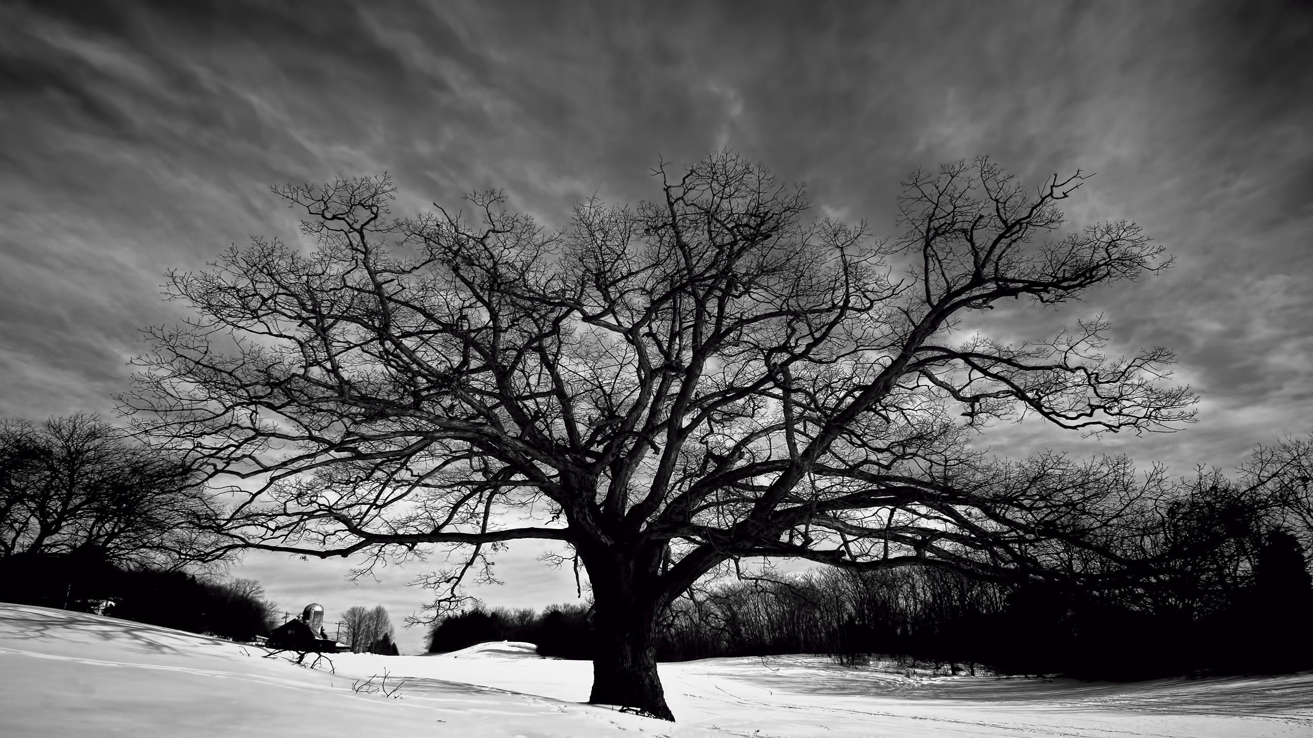 Tree Wallpaper Black And White PixelsTalkNet