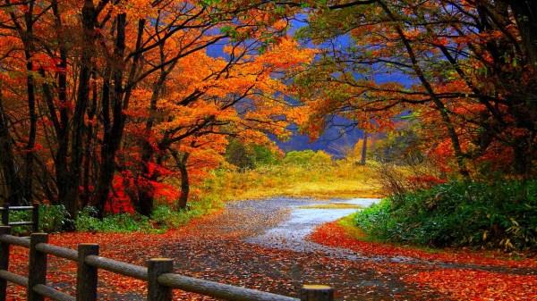 Fall Wallpapers HD | PixelsTalk.Net