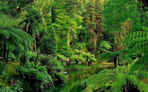 Jungle Wallpapers Free Download | PixelsTalk.Net