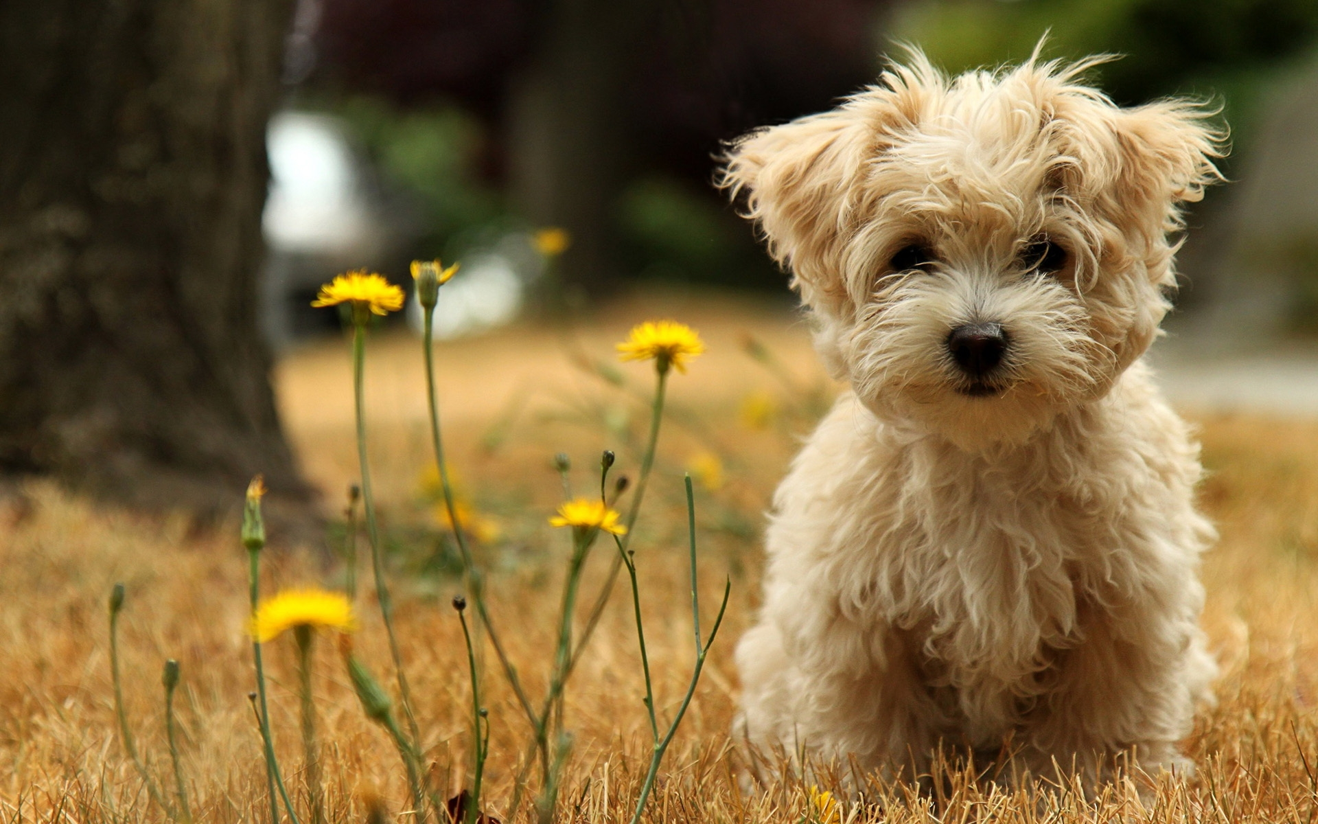 Hd Cute Baby Animal Backgrounds