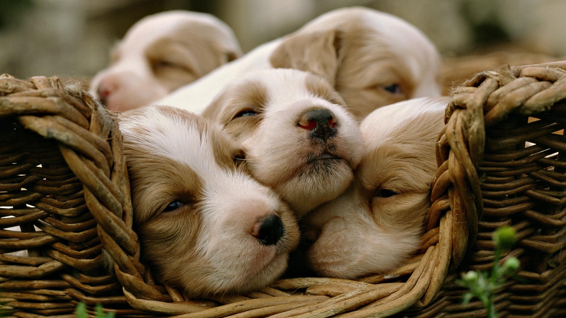 Cute Baby Animal Hd Wallpapers