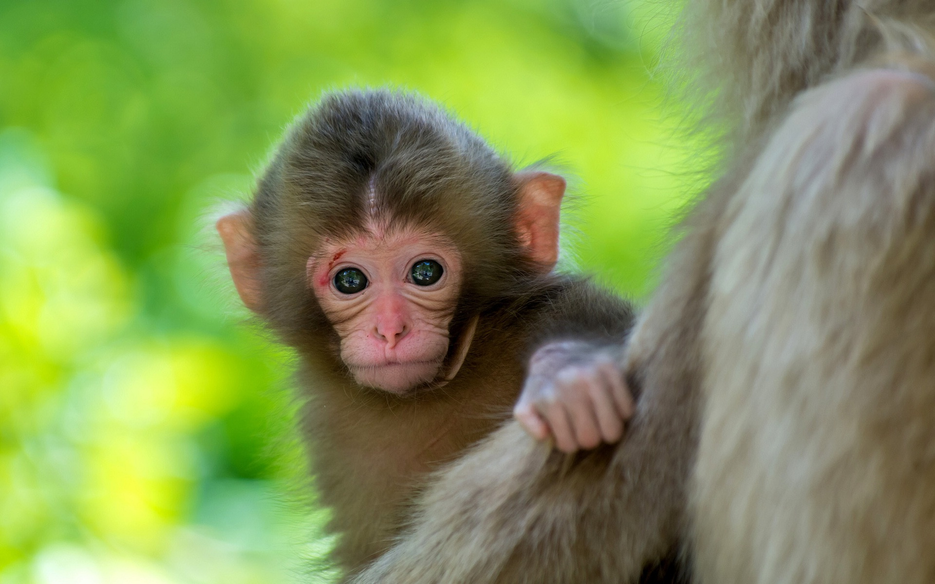 Cute Baby Animal Wallpapers Download Free
