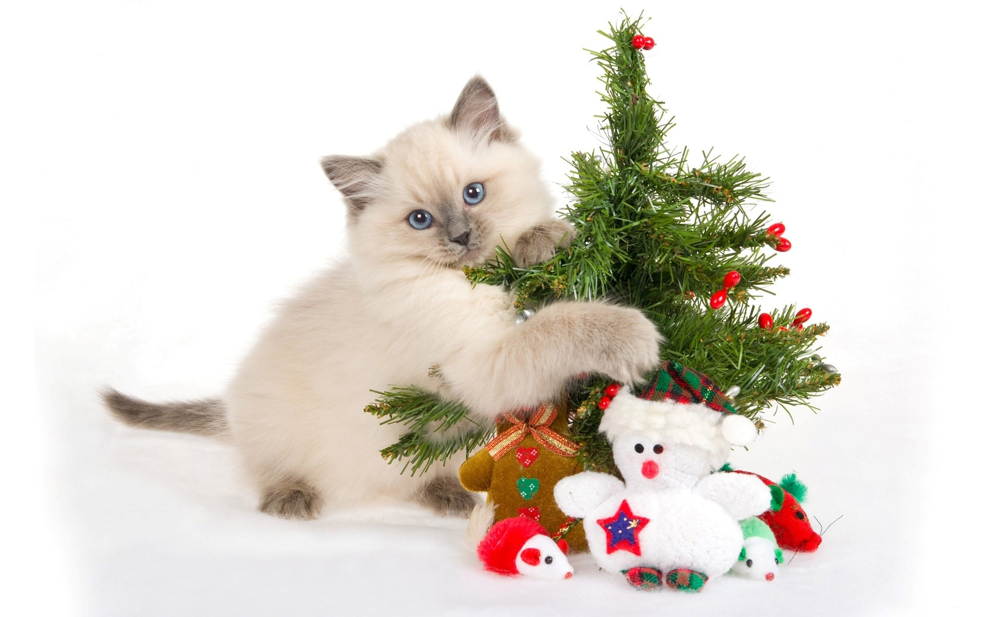 cute christmas backgrounds download free | pixelstalk