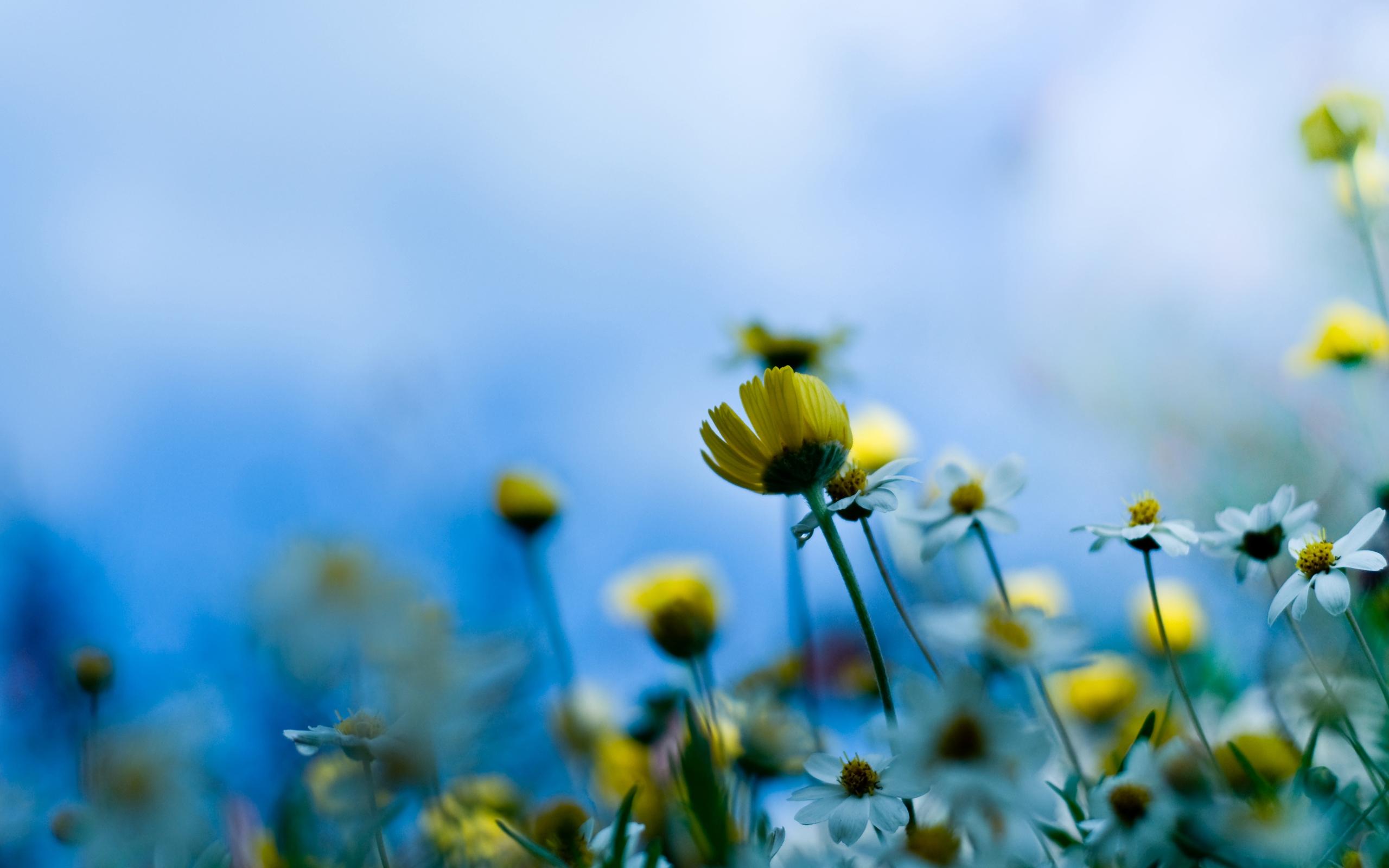 New baby blue aesthetic wallpaper iphone ideas instagram, aesthetic backgrounds. Flower Images Tumblr | PixelsTalk.Net