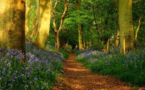 Forest Desktop Wallpaper HD | PixelsTalk.Net