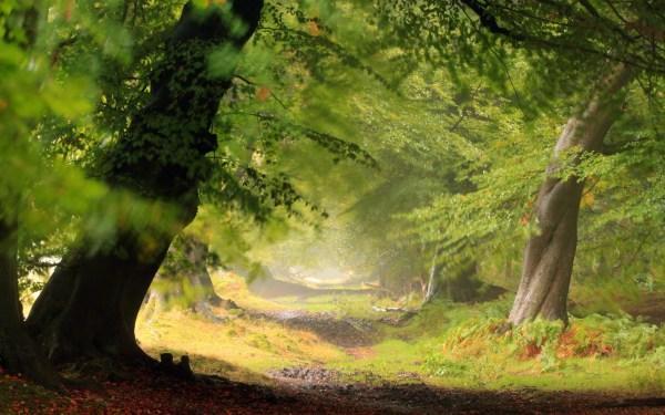 Forest Wallpaper HD | PixelsTalk.Net