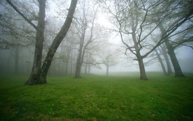 Nature Green Foggy Forest Wallpaper.
