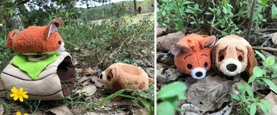Todd and Copper tsum tsums in grass.