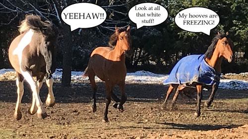 Image Of Horses Running