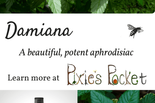 damiana - learn more about this aphrodisiac herb on pixiespocket.com