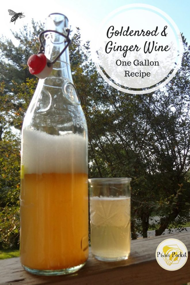 Goldenrod and Ginger Wine - one gallon recipes from pixiespocket.com