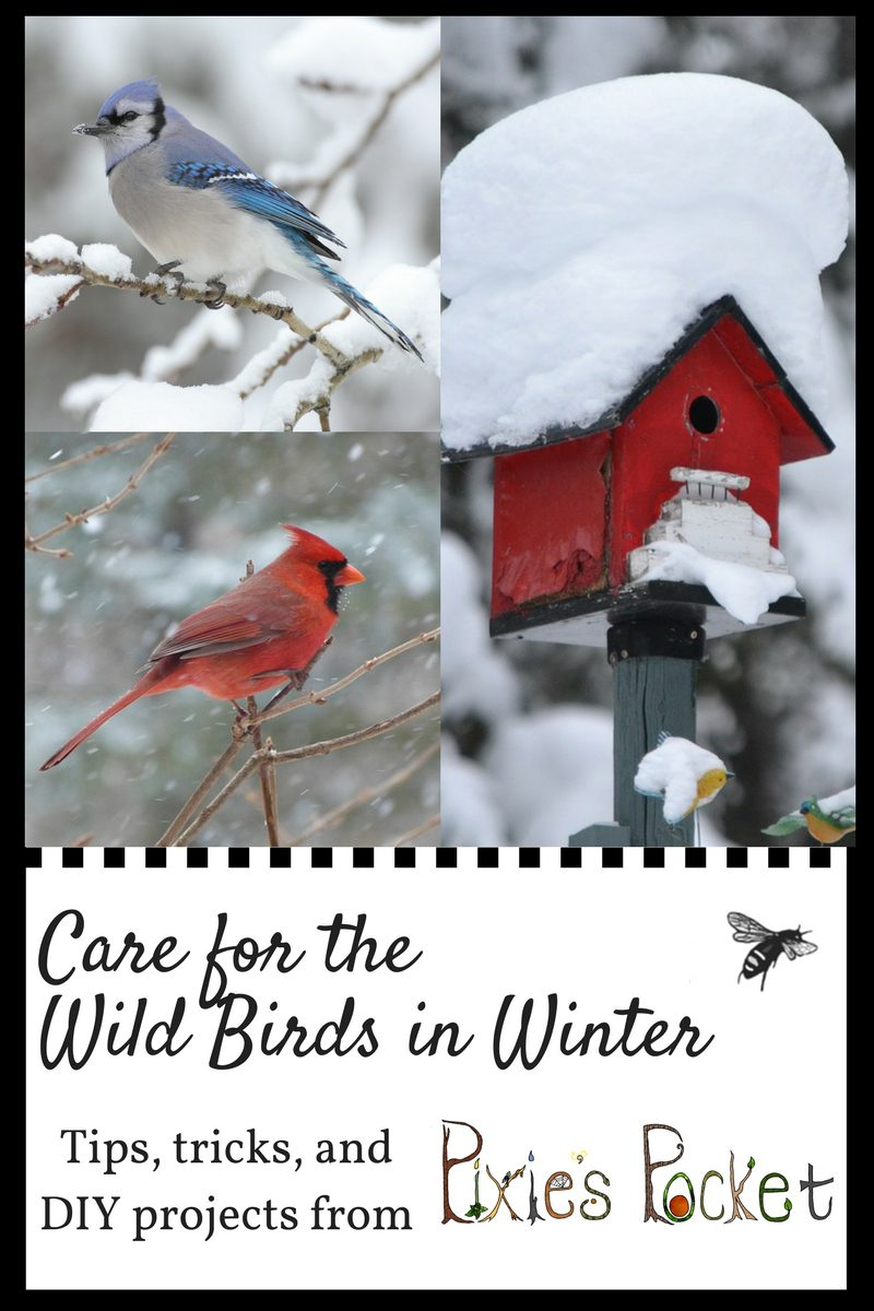 Care for the wild birds in winter: tips, tricks, and DIY recipes