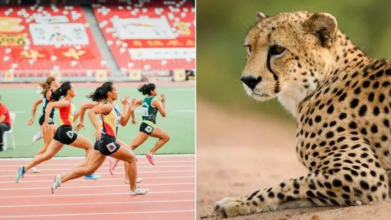 Wildlife and Sport