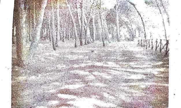 Colamaio, taglio di alberi. In tre arrestati e liberati