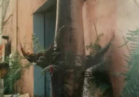 Il pesce spada a Pizzo del 1994